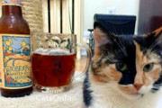 Instagram Account Pairs Cats With Beer, Makes Internet's Dreams Come True